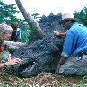 Still of Laura Dern and Sam Neill in Jurassic Park